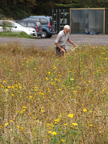Scythes in a wildflower meadow for beekeeping