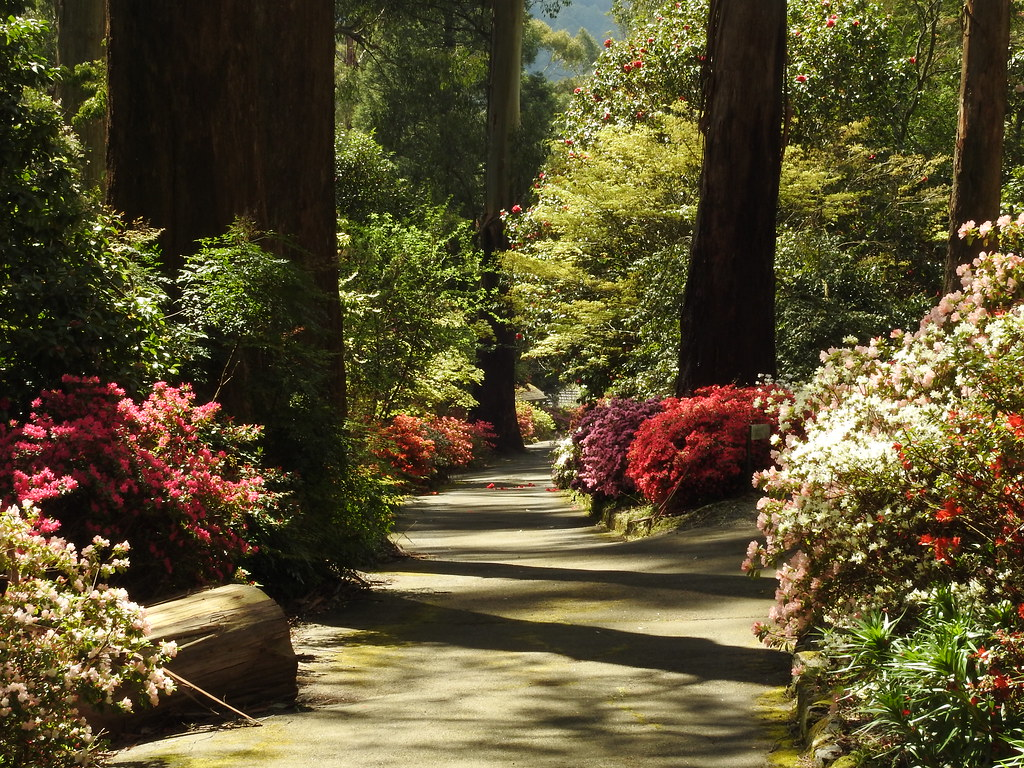 Garden beneath the mountain ash | George Tindale Memorial Ga… | Flickr