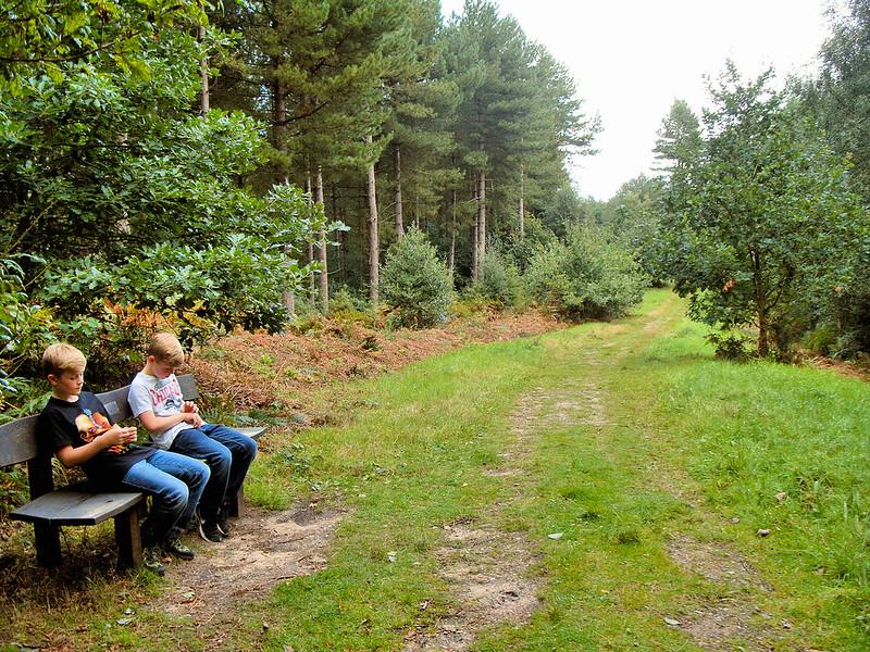 Sheringham Wood (Pretty Corner Woods)