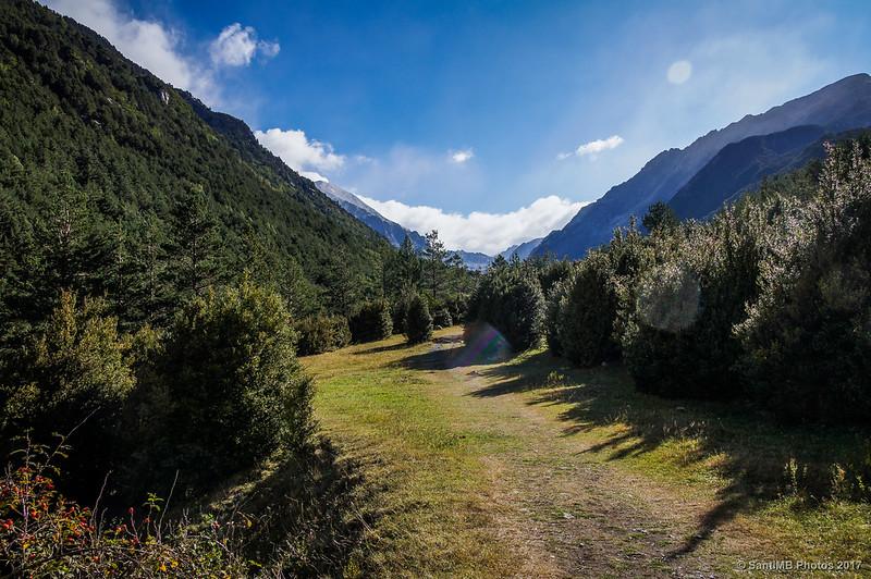 Un claro en el bosque, por la Ruta de la Nutria