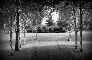 Tree-lined Miller Park in Preston | by Tony Worrall
