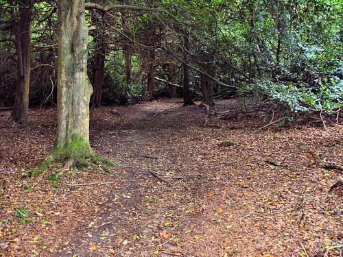 Walking through Edward's Plantation...