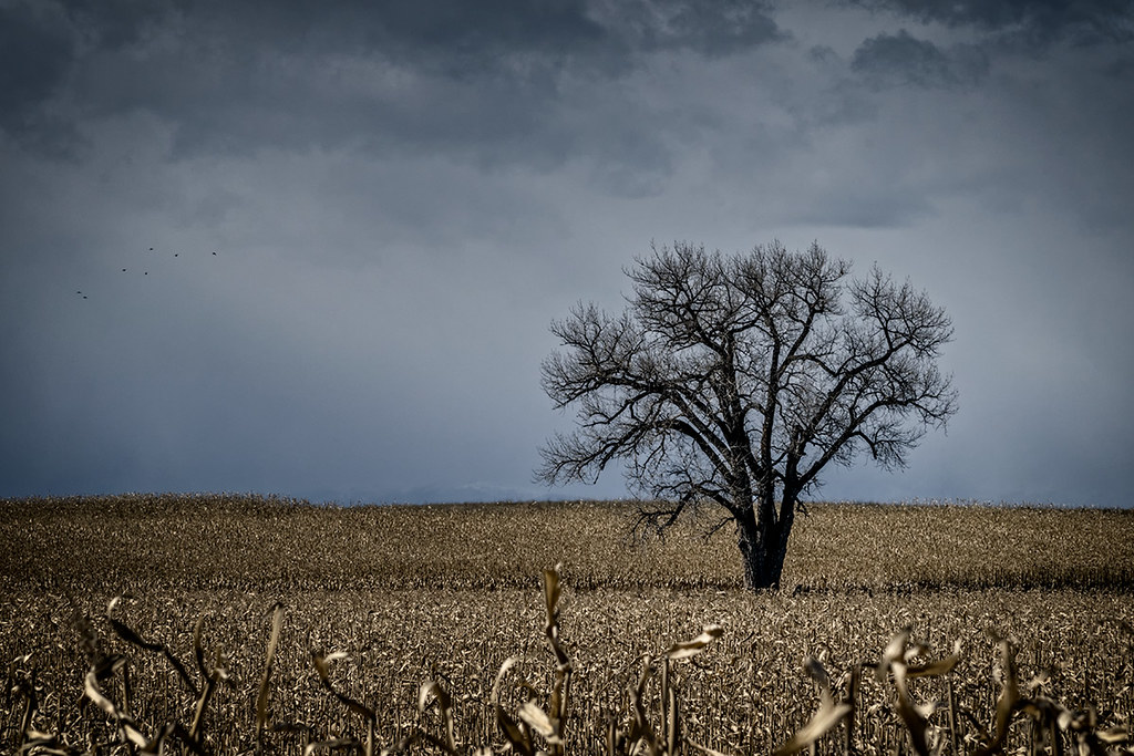 Weld County, Colorado