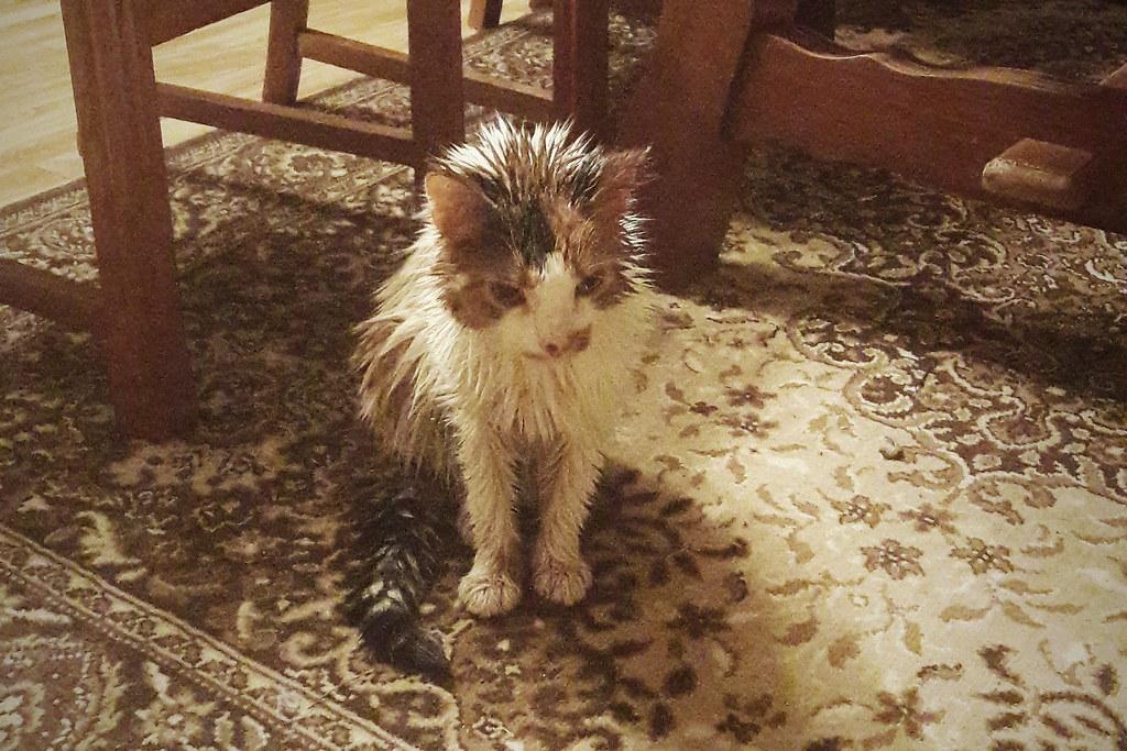 Dating hem sida för katt älskare