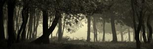 Arco-Íris Reloaded: «Osgiliath Wood»