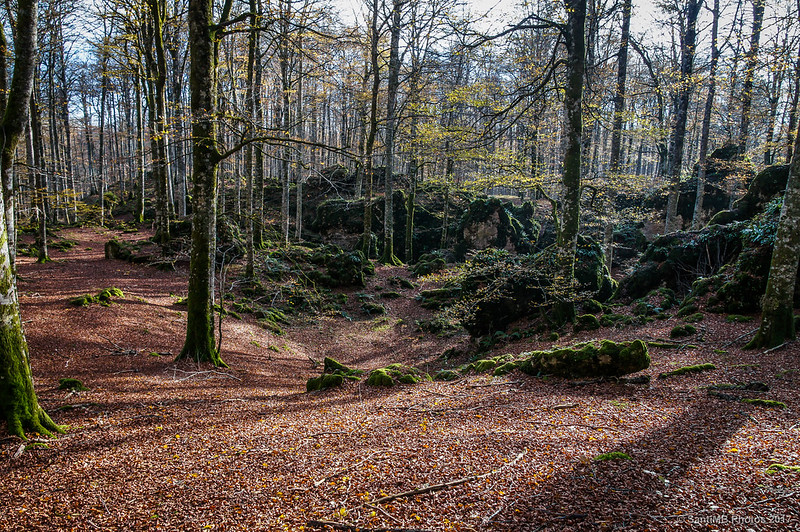 Coonjunto rocoso en el Bosque Encantado de Urbasa