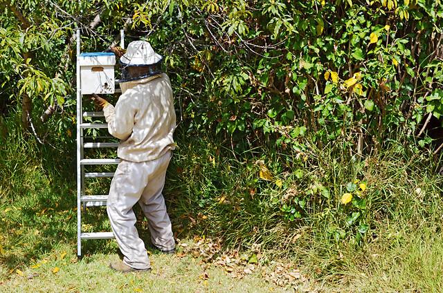 Beekeeper, Tenerife