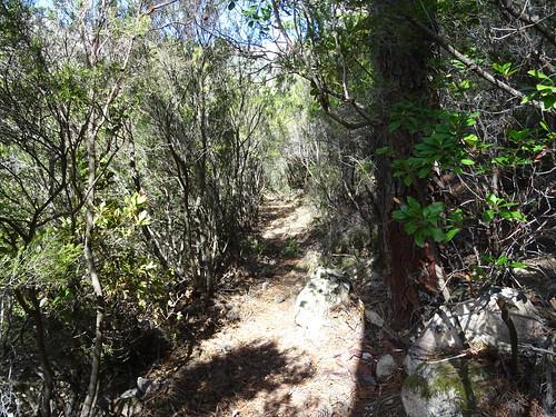 Le Chemin d'exploitation du Carciara en RG de la Figa Bona : la descente vers le ruisseau de Figa Bona