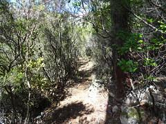 La descente vers le ruisseau de Figa Bona