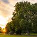 Sunset Sun Flare Autumn Fall Green Yellow Fiery Sky Park Forest