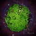 Moss Island⠀⠀⠀