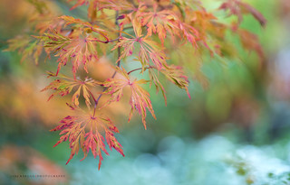Autumn Pastels | by jraposo3072