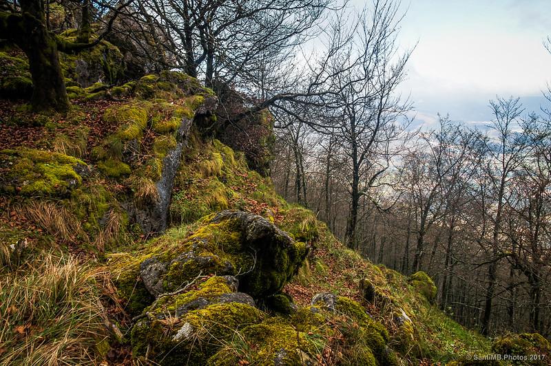 Vista del bosque de la ladera norte de Urbasa