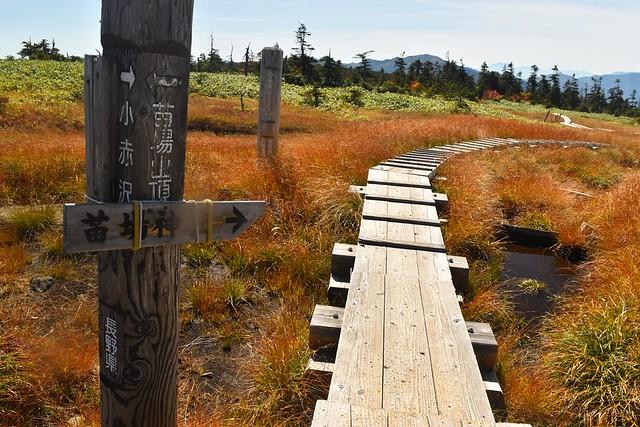 山頂から苗場山神社へ