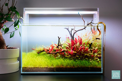 Ultum Nature Systems 5N Nano Planted Betta Tank | by 1013MM