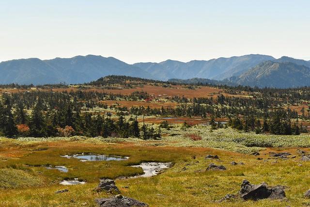 苗場山山頂の広大な湿原