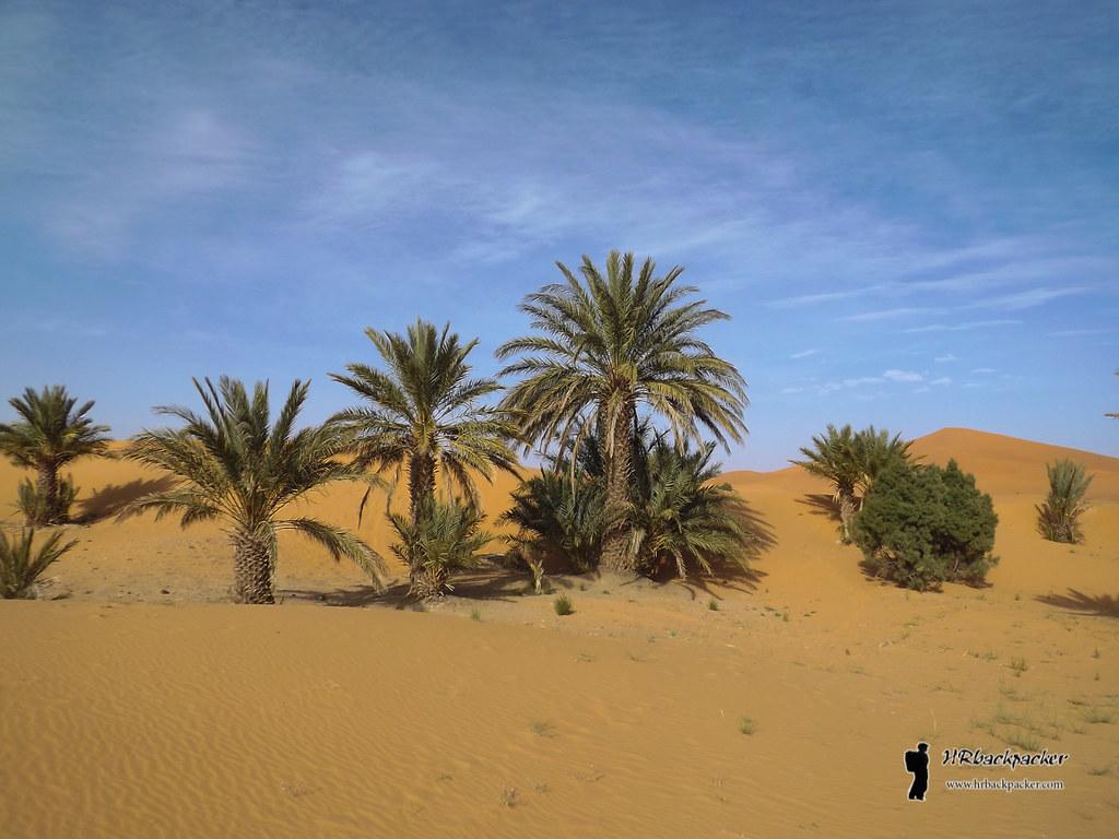 Stariji izlazak iz palmine pustinje