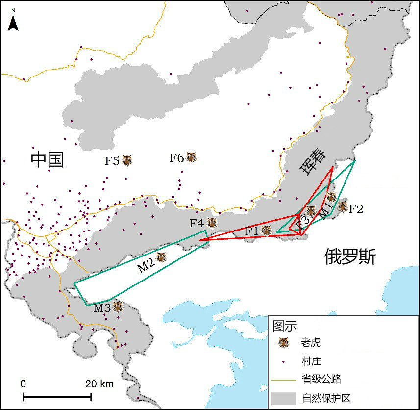 透過老虎糞便DNA調查,琿春保護區的老虎2013到2015年間監測到的活動範圍。紅色和綠色框線代表老虎活動範圍,黑點代表人類聚居地。來源:竇海龍等,2016,PLOS One