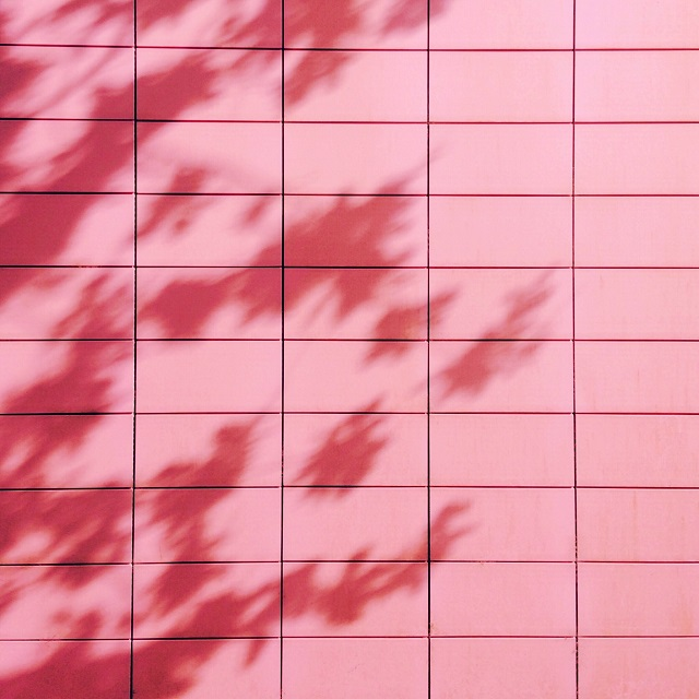pink wall with tree shadows