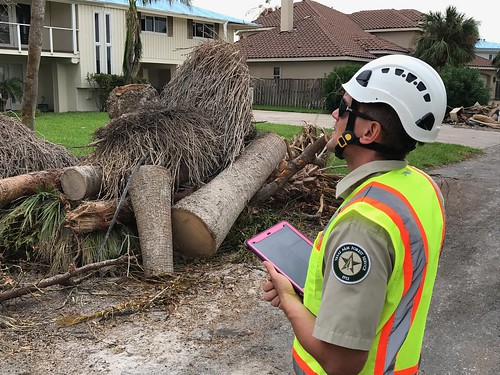 A member of the Urban Forest Strike Team surveying damage from Hurricane Harvey