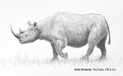 Cómo dibujar un rinoceronte negro - Narrado | Mira el