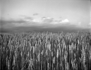 grain on grain | by john grzinich
