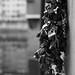 Love locks on the Ponte Vecchio