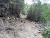 Le chemin du Carciara en RD : la descente après l'embranchement des vasques de la confluence Peralzone
