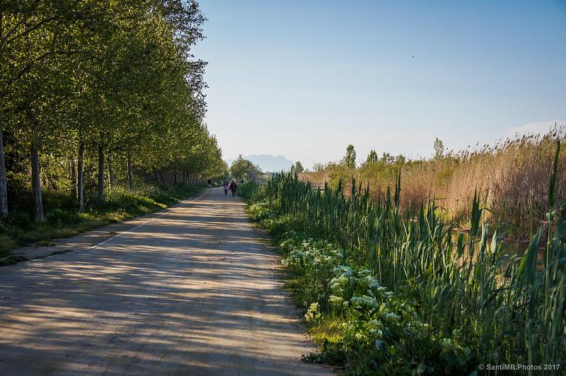 Camino del Canal de la Bunyola