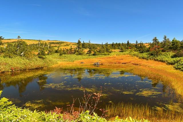 苗場山 湿原の池