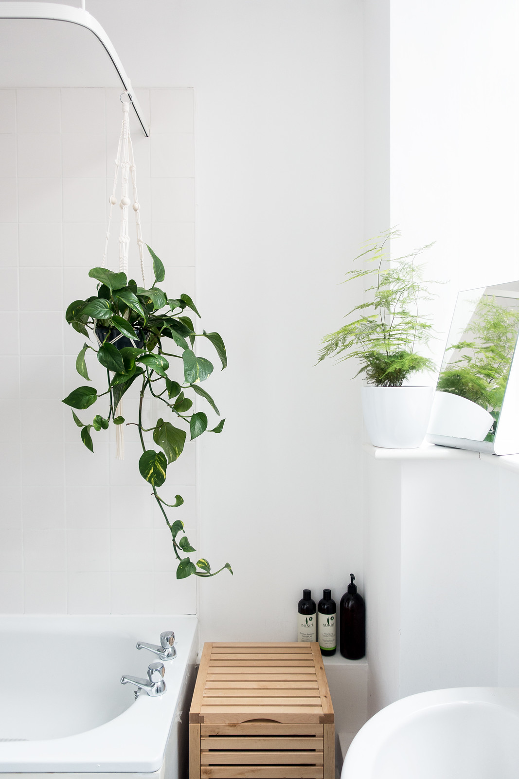 hanging bathroom plants