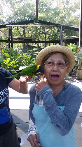 Tampa Lowry Park Zoo: Lorikeets