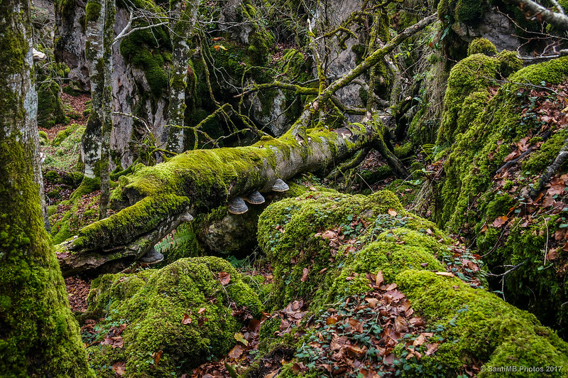 Bosque Encantado de Urbasa