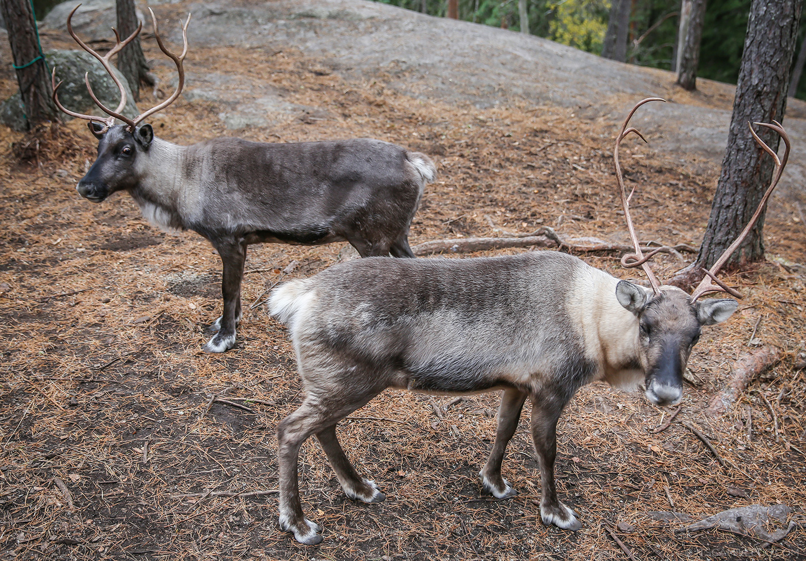 Reindeer Park, Nuuksio - www.itscamilleco.com
