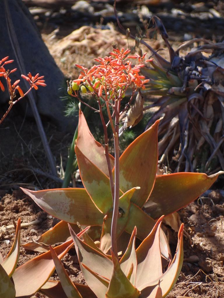Karoo National Botanical Gardens - Worcester | Esther Westerveld ...