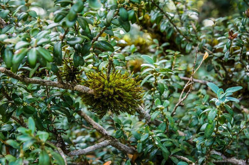 Musgo en una rama de un arbusto