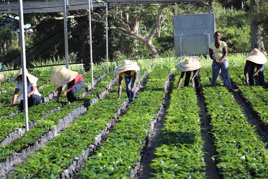 Resultado de imagen para proyecto agroforestal