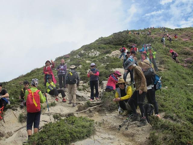 合歡北峰步道每逢假日的人潮。攝影:陳理德