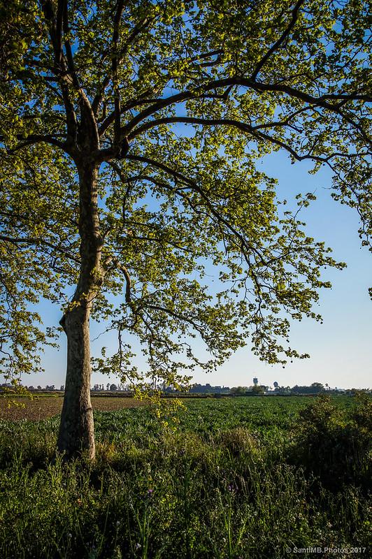 Campos del Delta del Llobregat en un atardecer de primavera