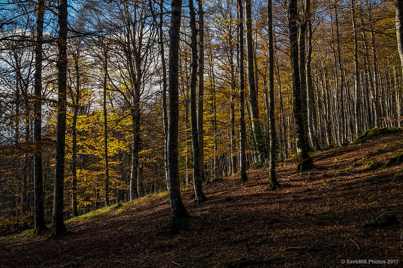 Bosque de Urbasa