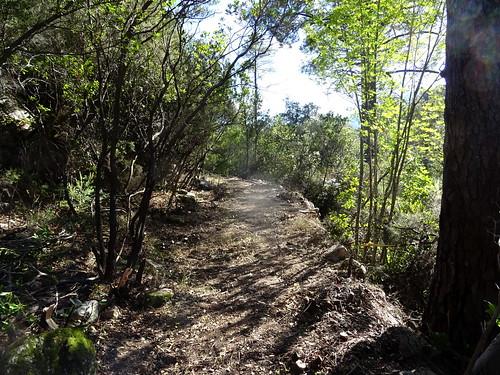 Le Chemin d'exploitation du Carciara en RG de la Figa Bona : retour vers le départ du chemin