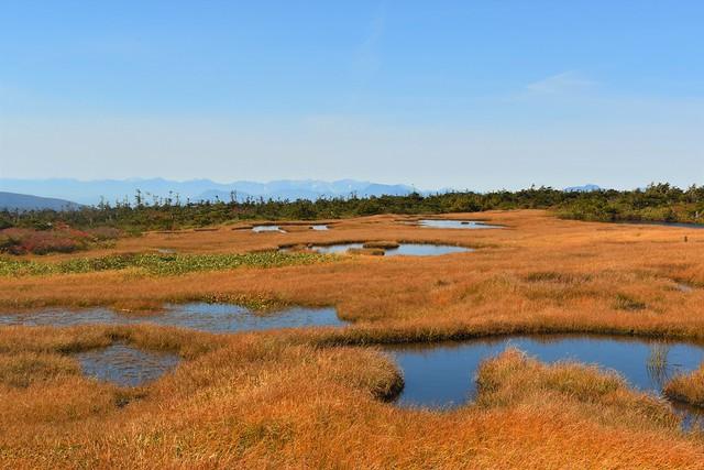 苗場山湿原の池塘