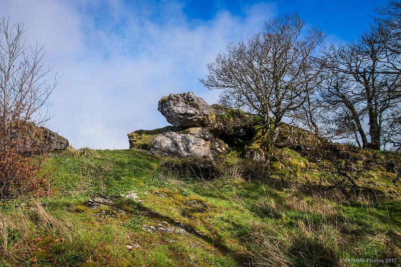 Lagarto de roca en la crestera del Tontorraundi