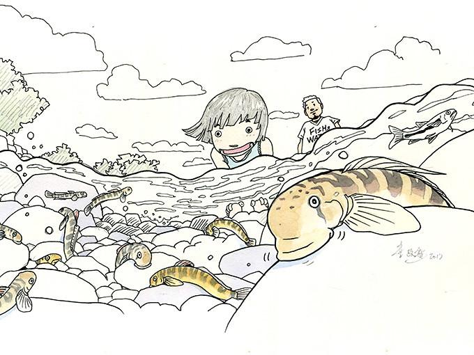 日本禿頭鯊。繪圖:李政霖。