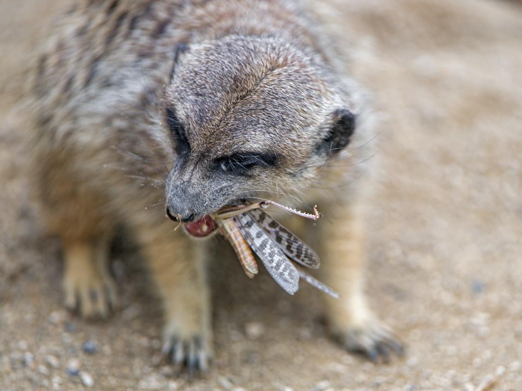 Eating Wild Food