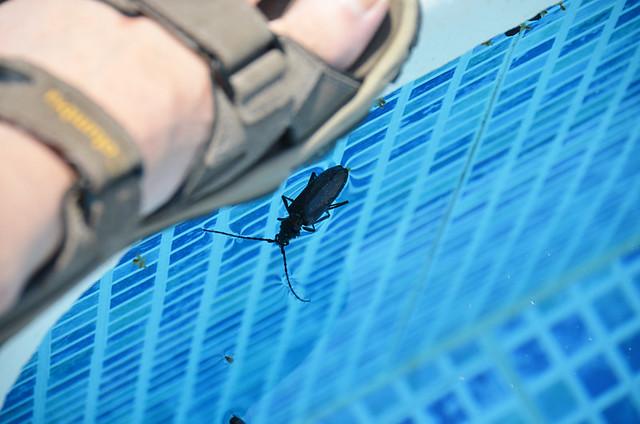 Bug, Galegos, Portugal