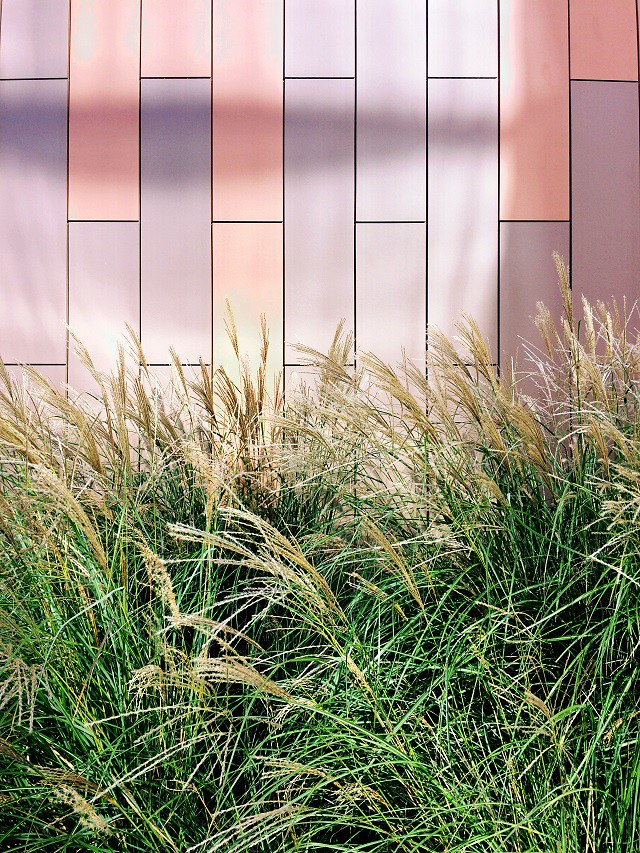 grasses against tiled wall