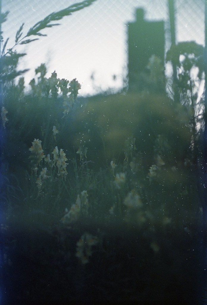 Fields Sanha Matas Flickr