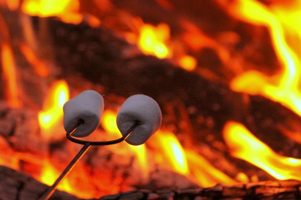 Image result for roasting marshmallows
