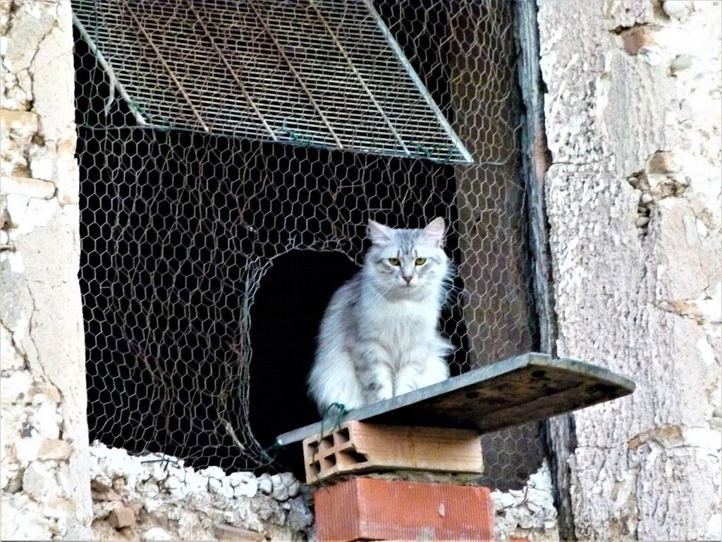 todo gato es un teléfono pero todo hombre es un pobre ho… | Flickr